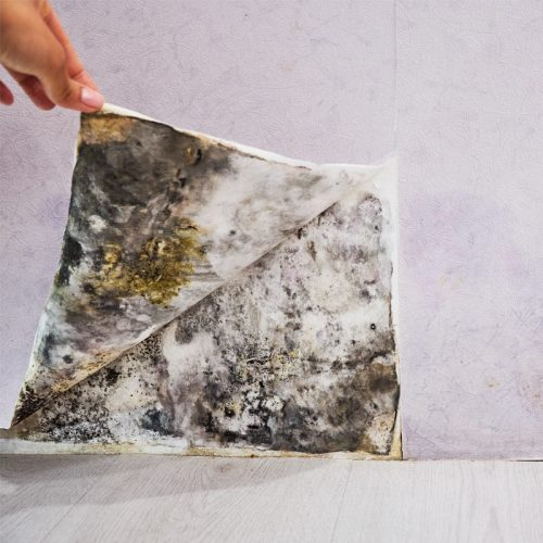 Mold Repair and Removal Edmonton